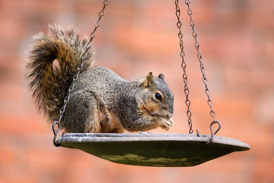 squirrel-900.jpg