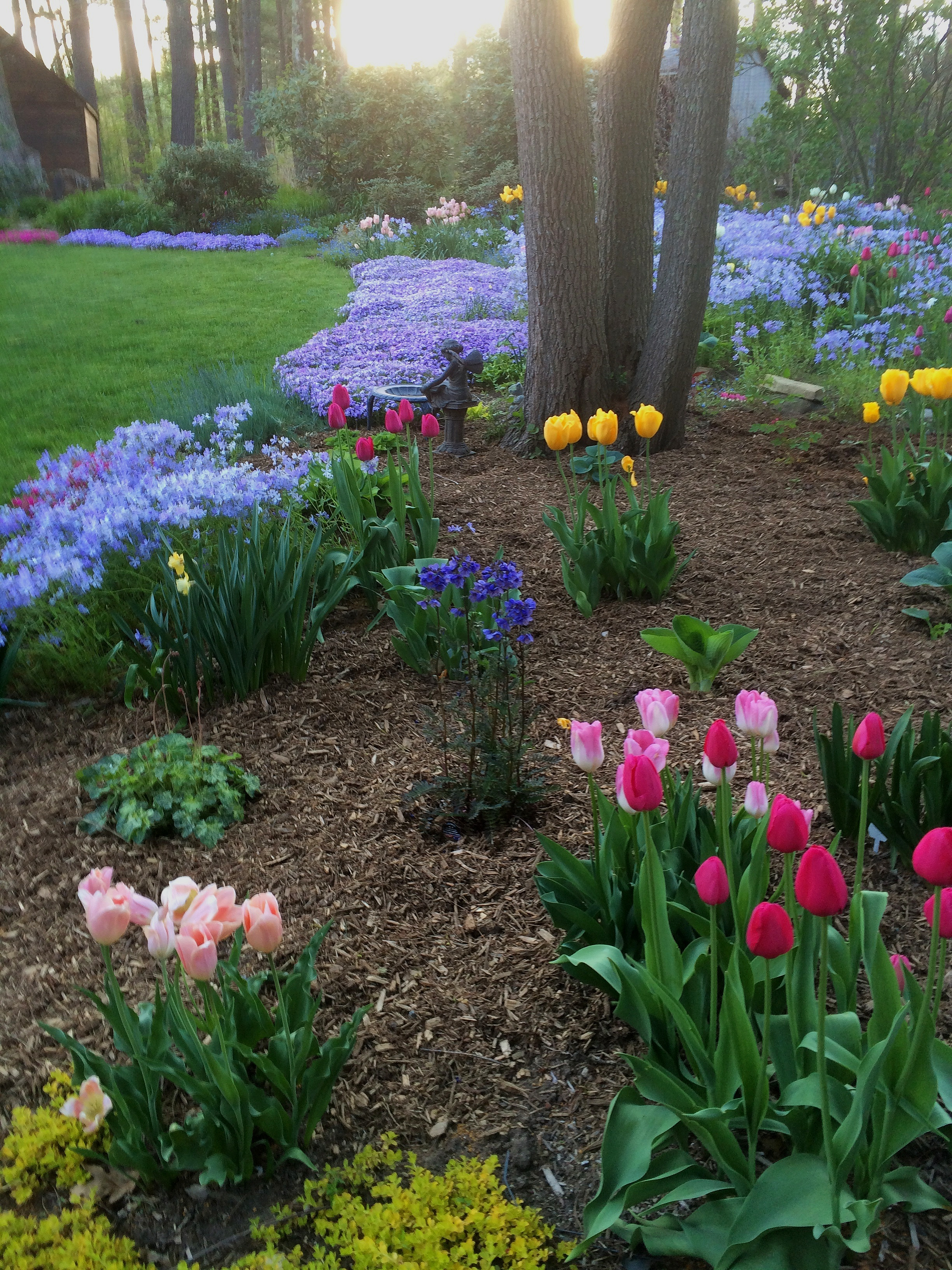 Make your yard simply elegant with vibrant tulips, crocus, and hyacinths.