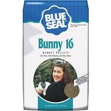 bunny 16.jpg