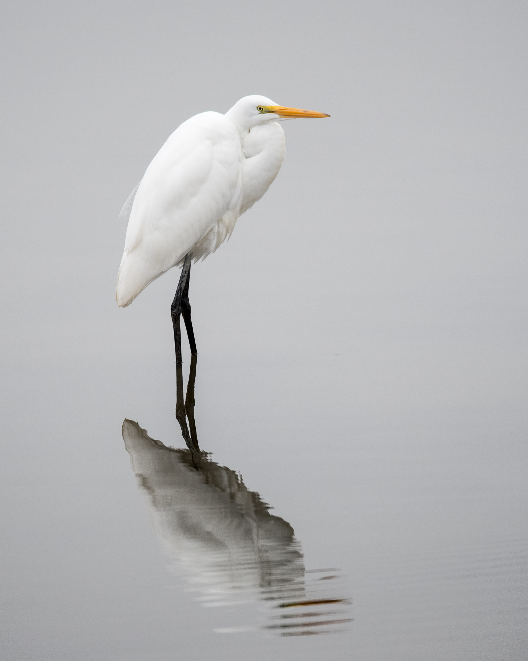 Standing Tall, Selected to the Booth Photography Guild 2018 Fall Exhibition.