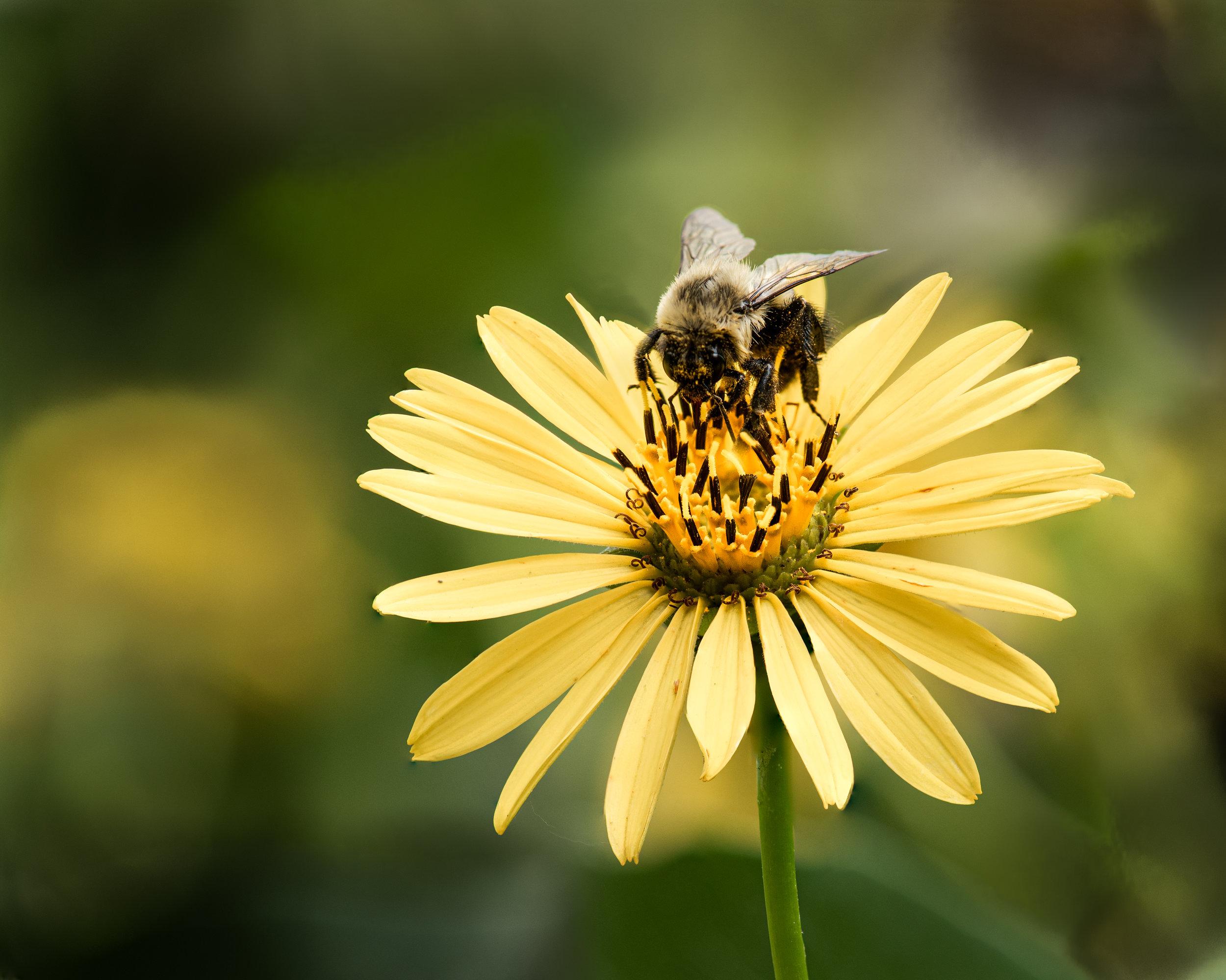 DSC_4630-Bee.jpg