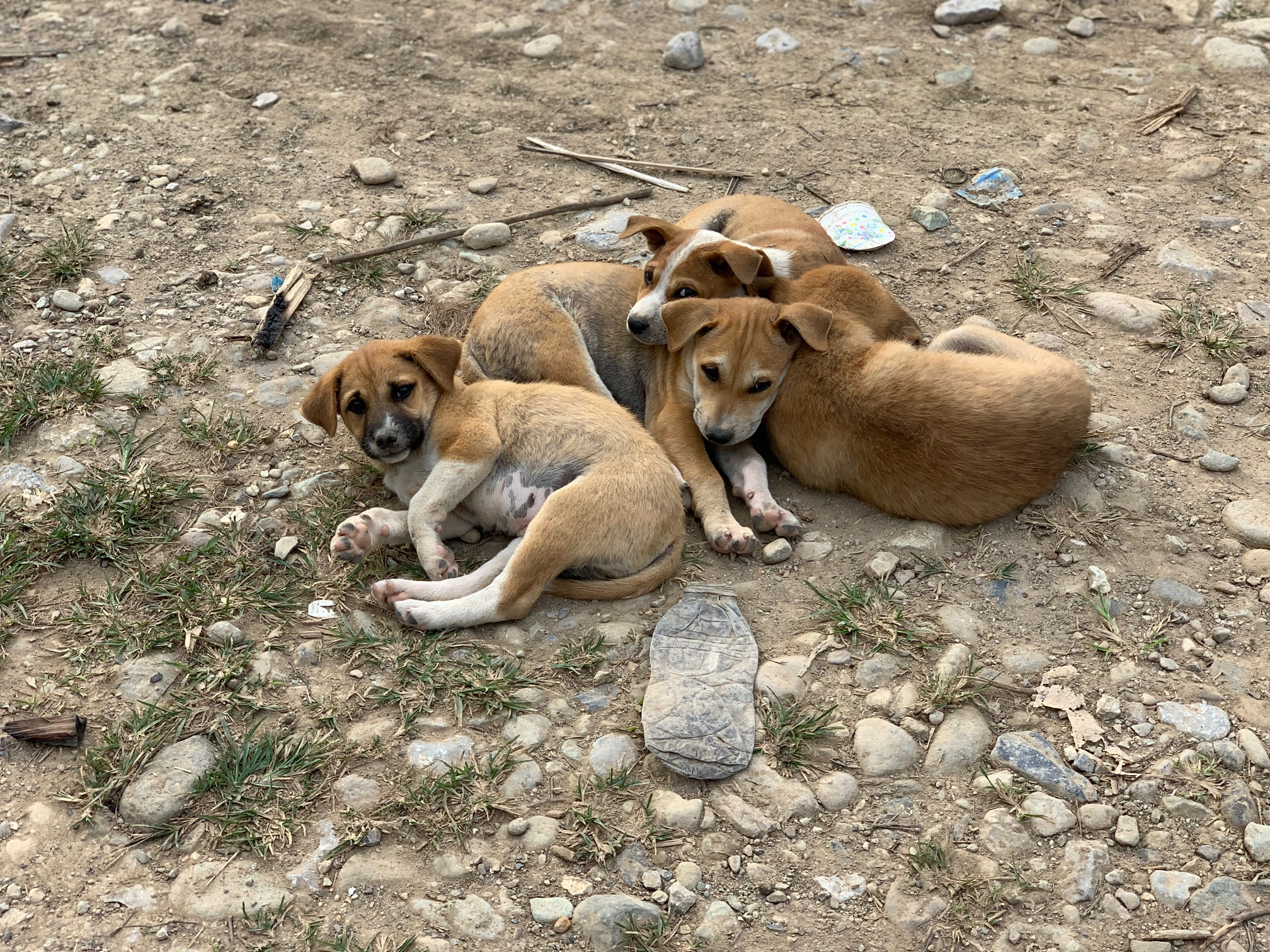 40 - puppies we wanted to take home (conservative count)