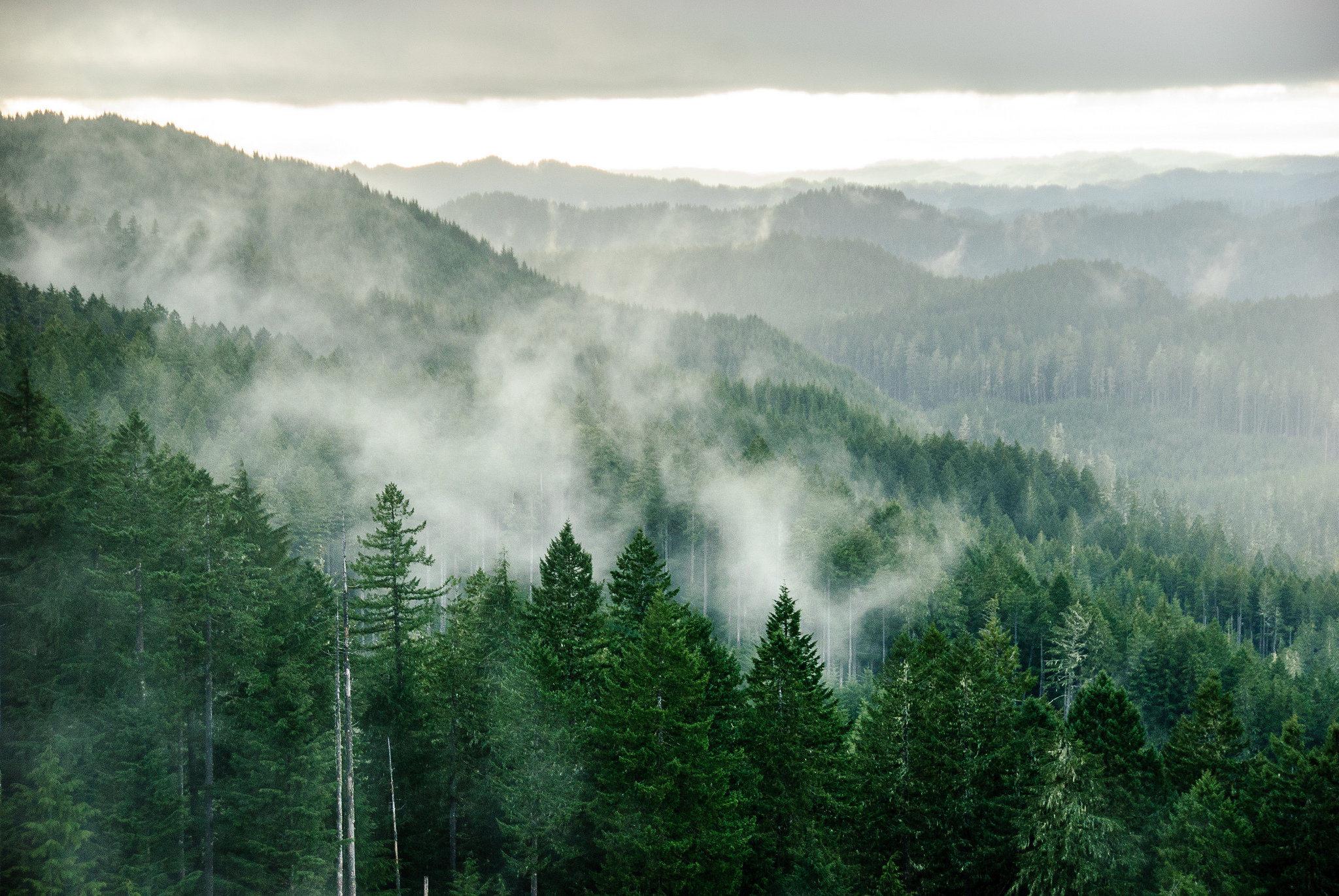 - 9. Oregon