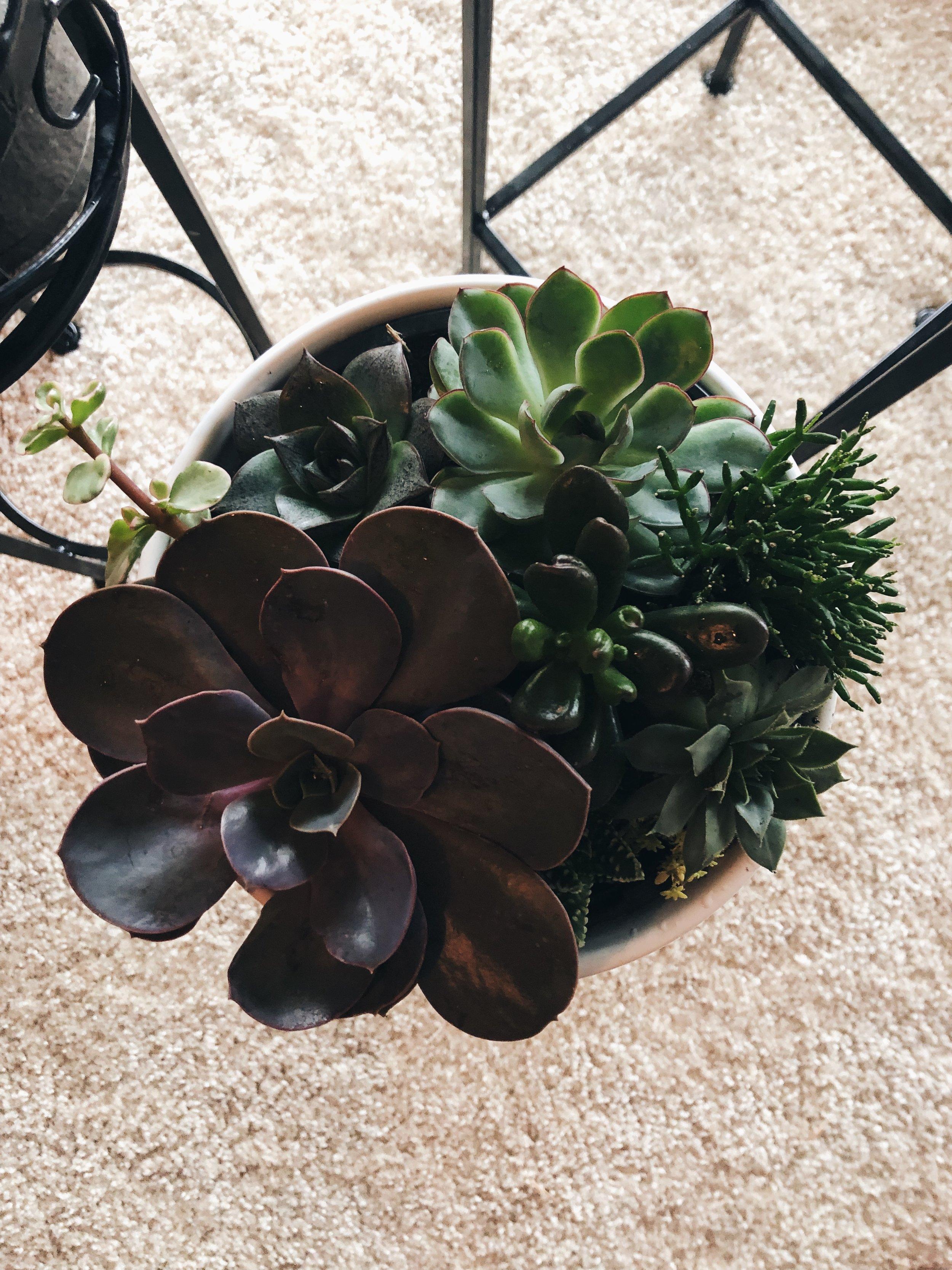 """Colin"" the Succulent bowl - Various"