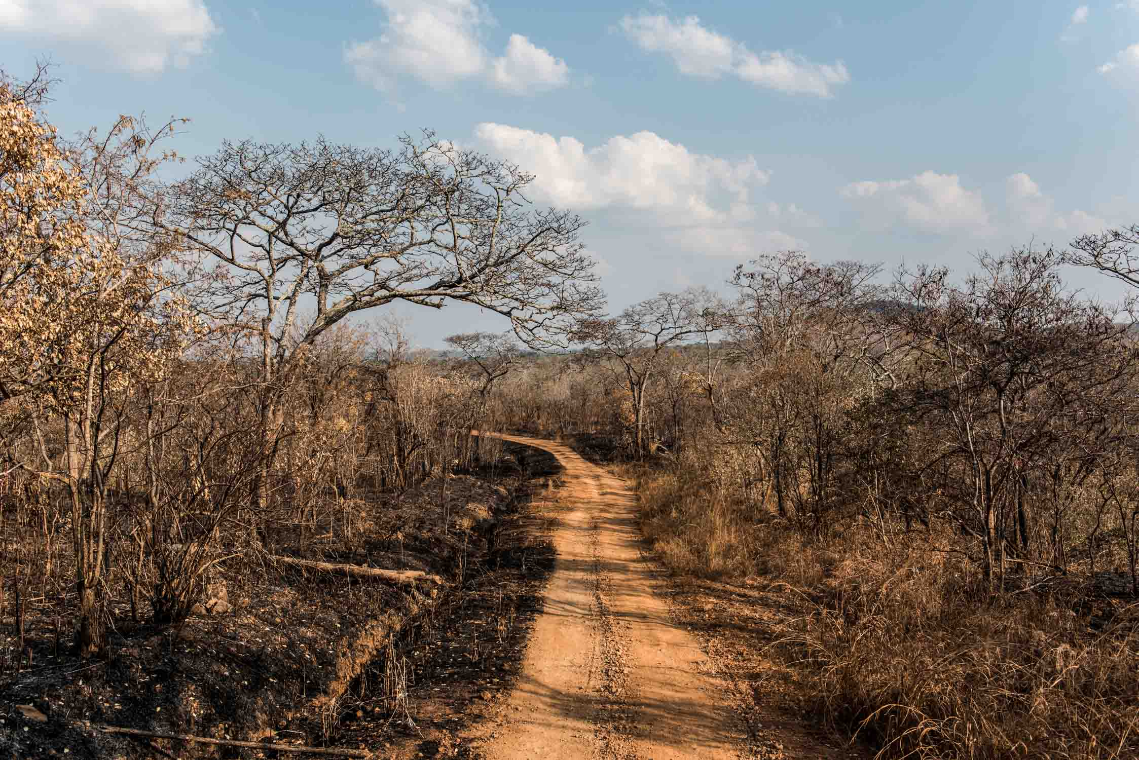 Burned land after uncontrolled wildfires in the southern sector of Selous during dry season.