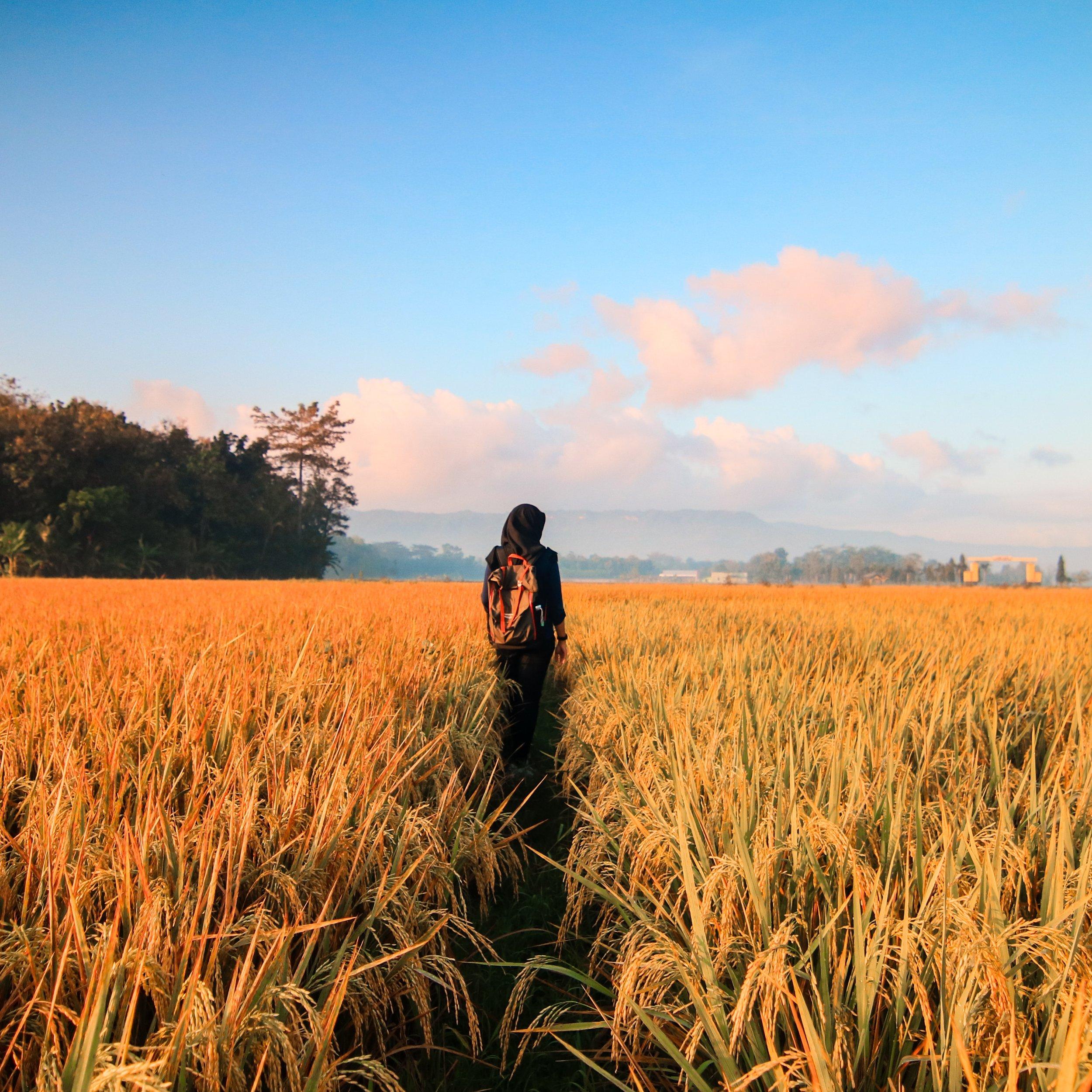 adventure-agriculture-barley-789555.jpg