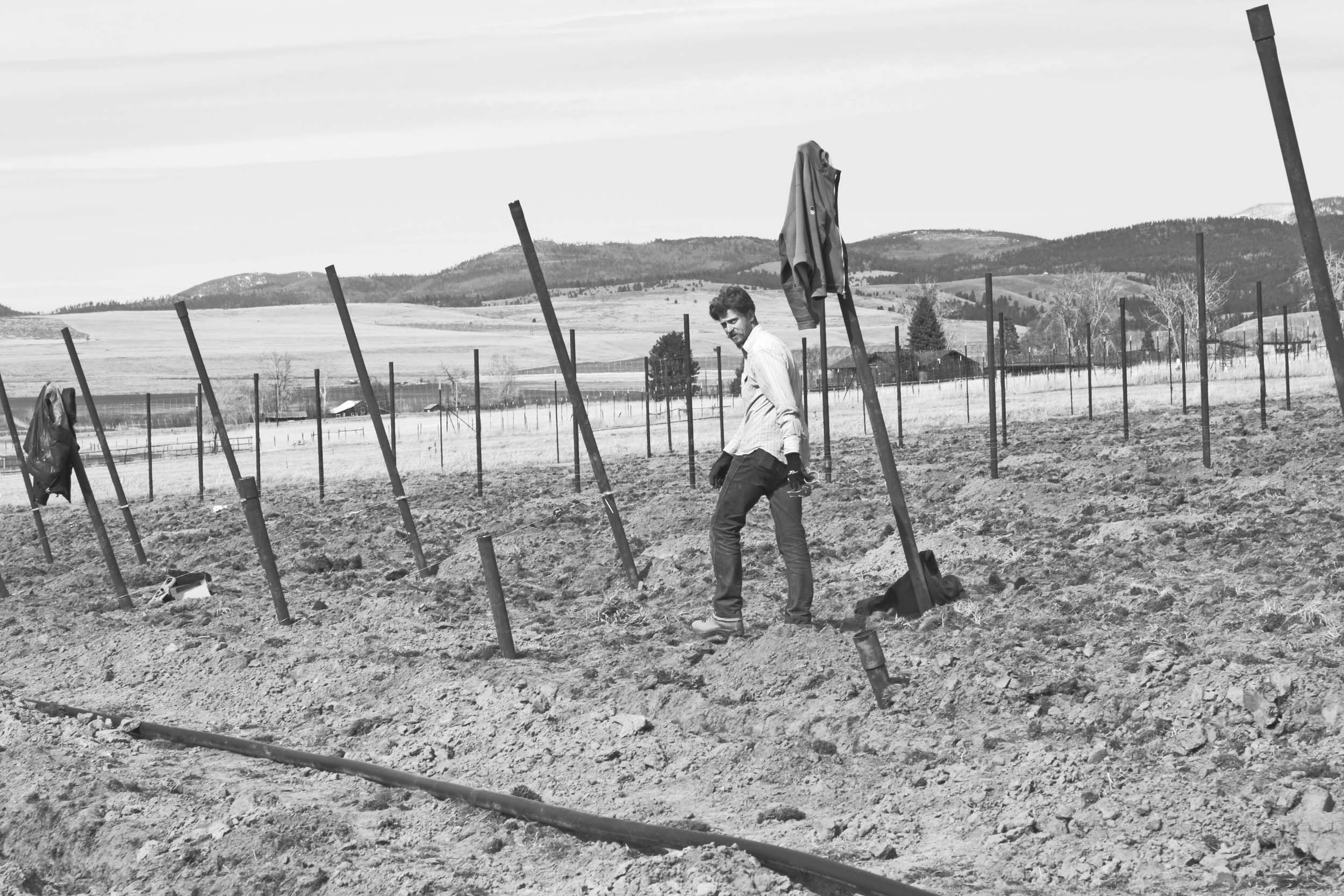 The beginning . . . installing trellis in bare ground - 2011