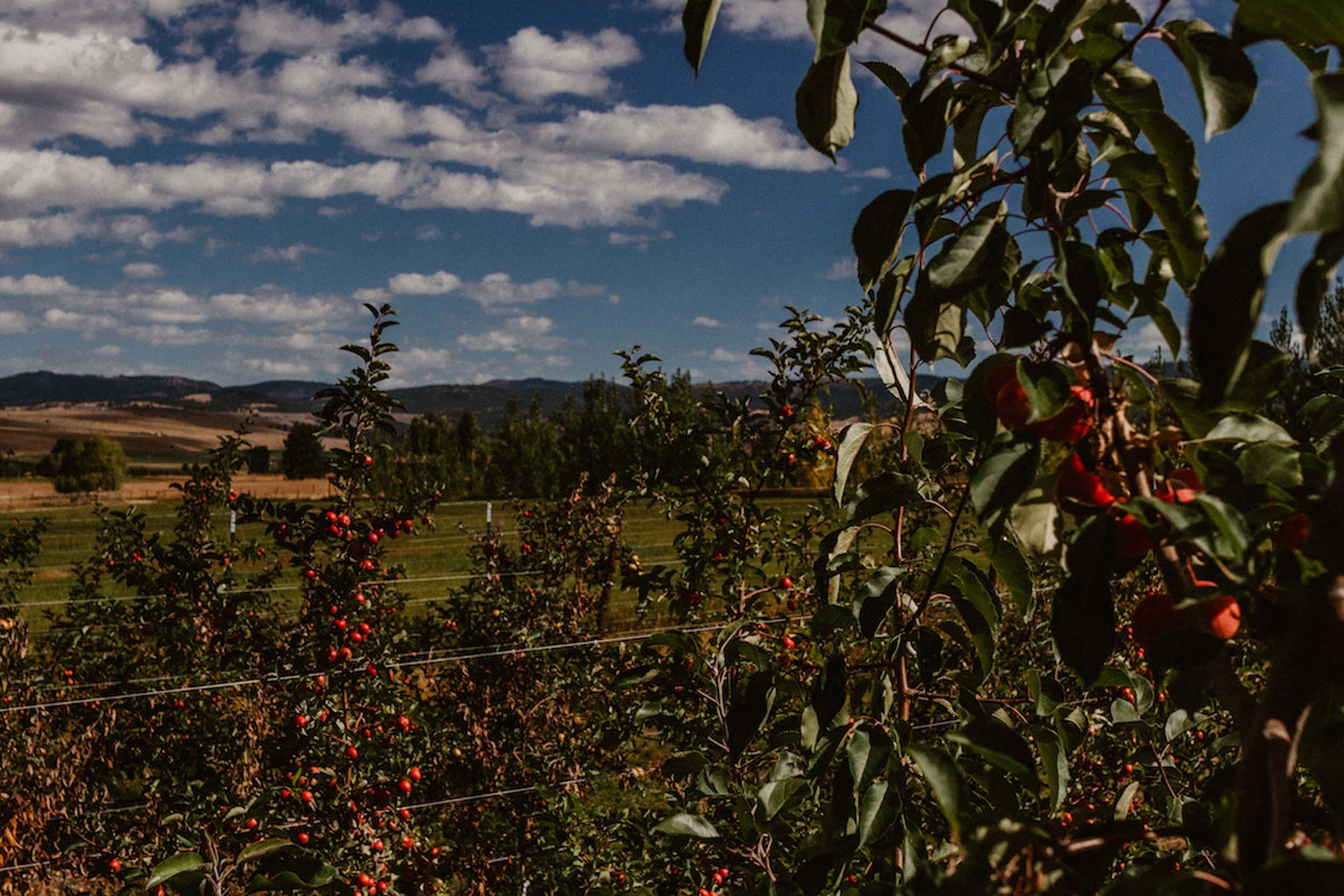 9.16 Billingsley Orchard-26.jpg