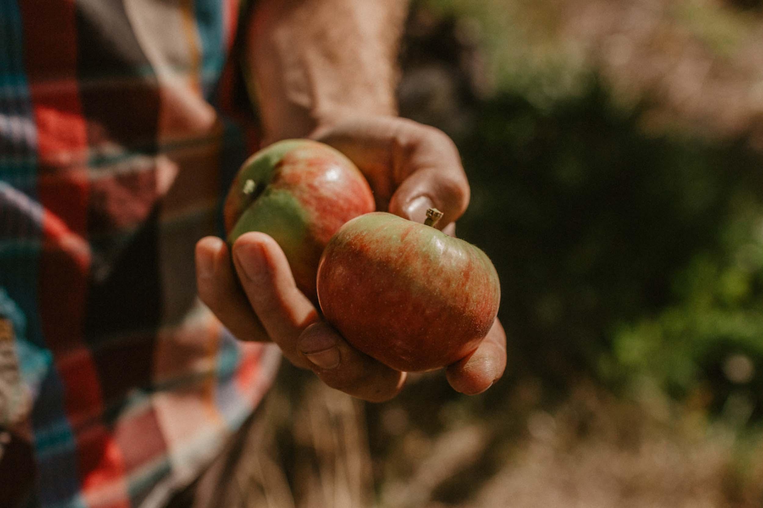9.16-Harvest-74.jpg