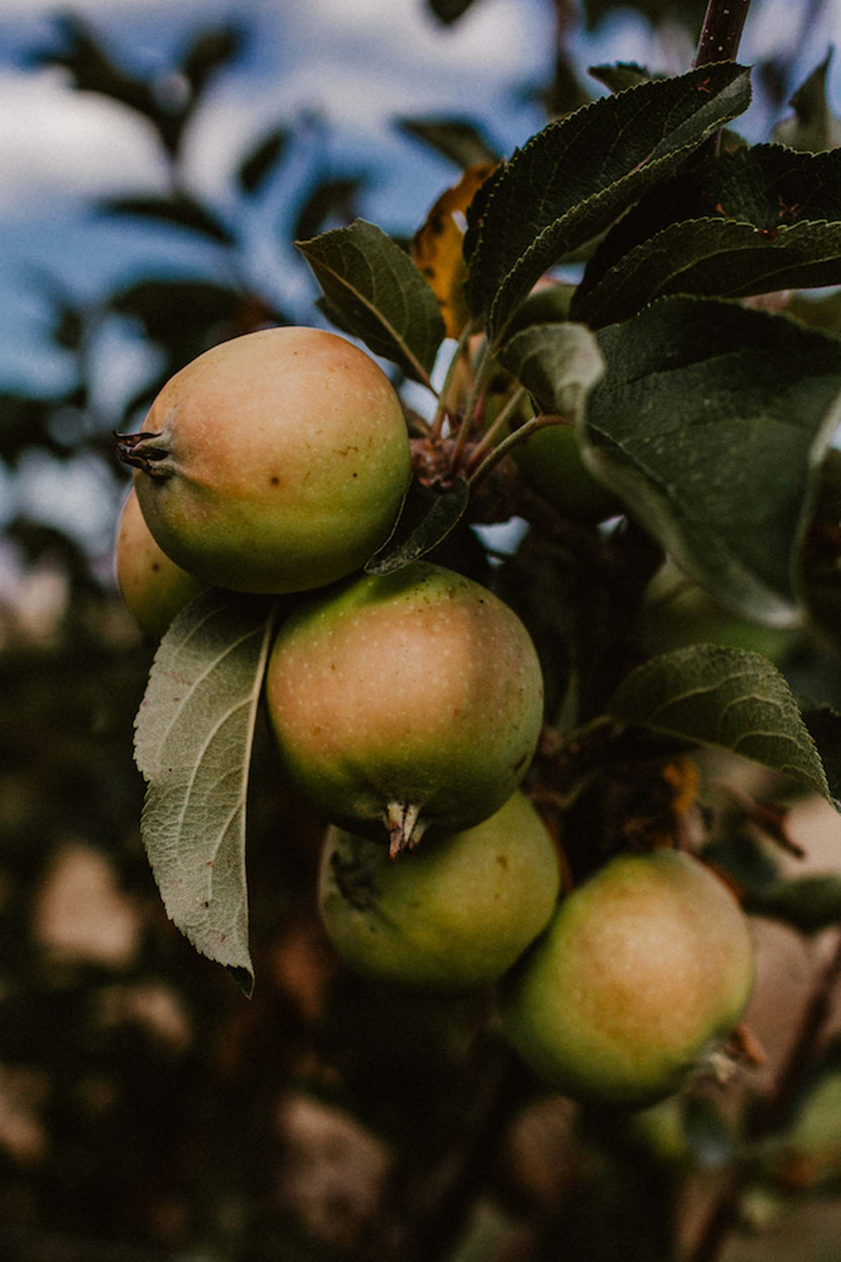 9.16-Harvest-25.jpg
