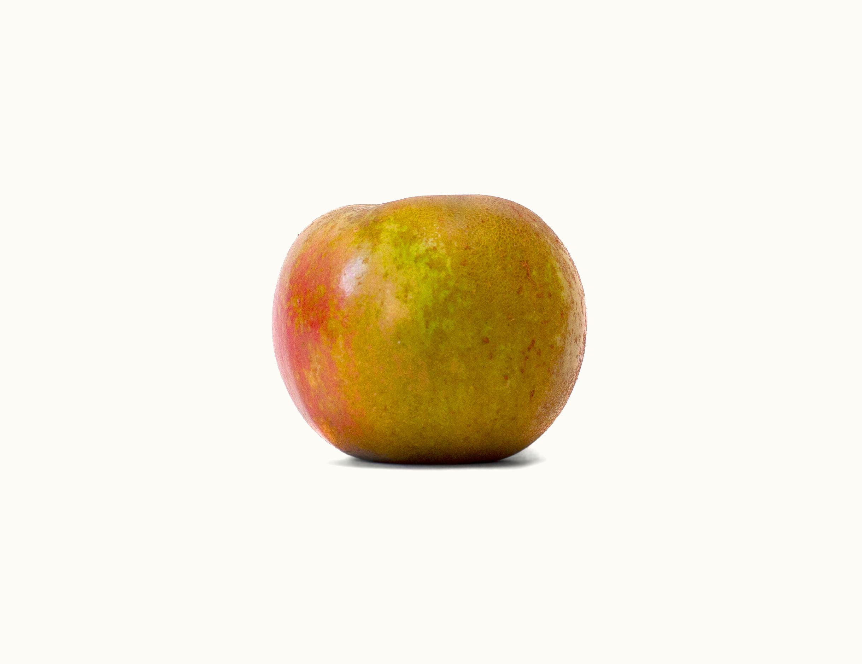 9.16-Harvest-35.jpg