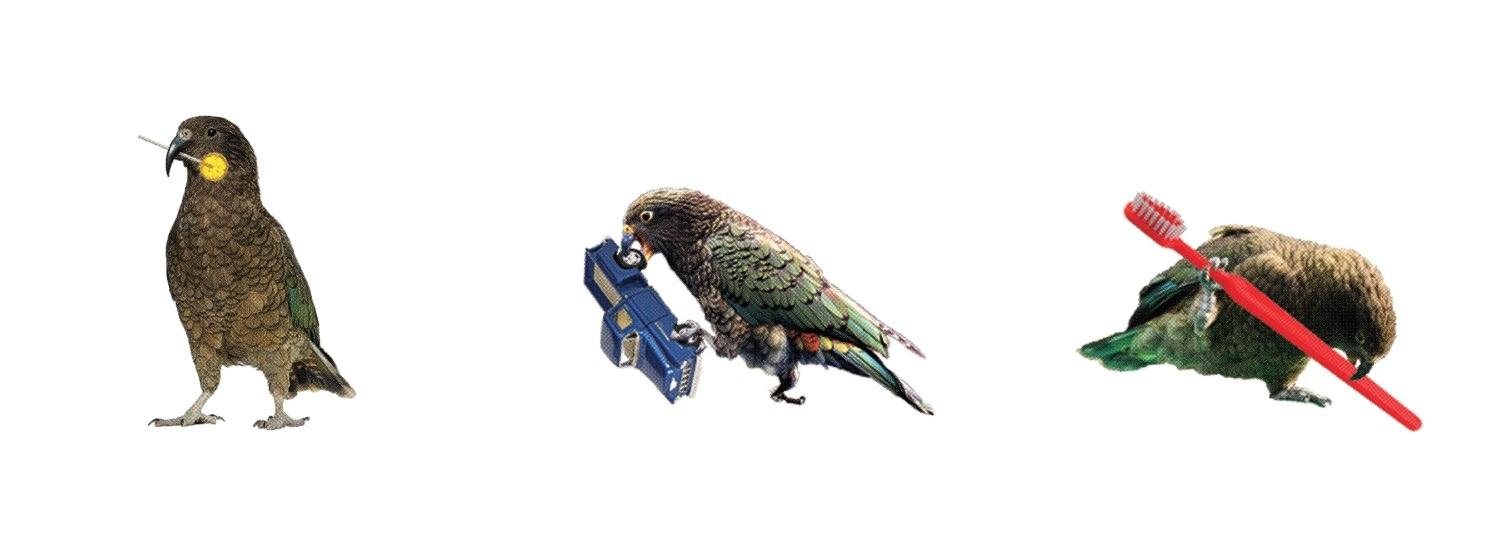 Meagan-Hindel-Print-Birds.jpg