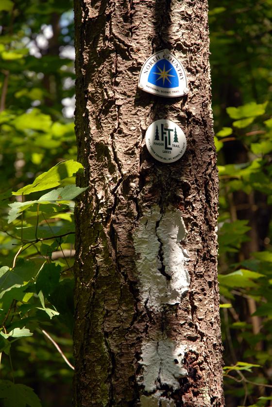 Finger Lakes Trail Hike Blaze167.jpg