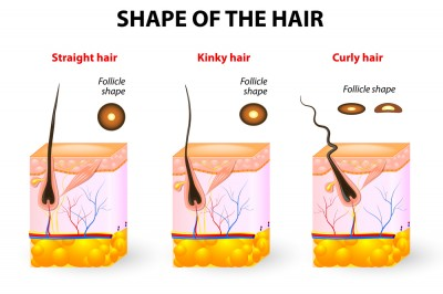 shape of hair.jpg