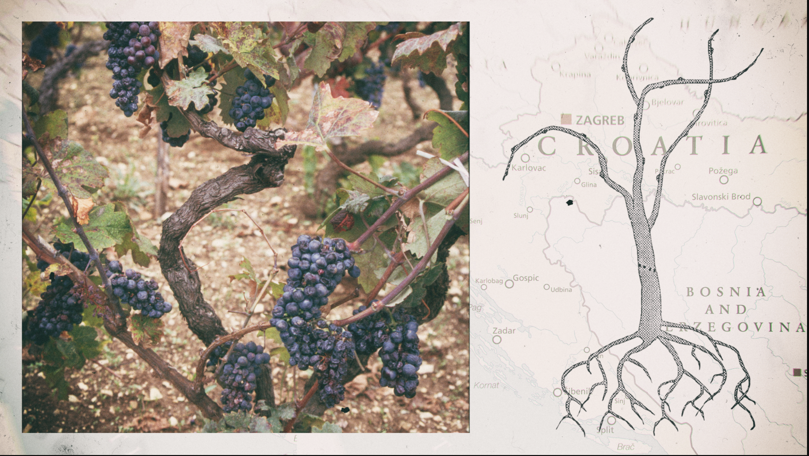 zinfandel_borderless_wine_seven_fifty_daily.png