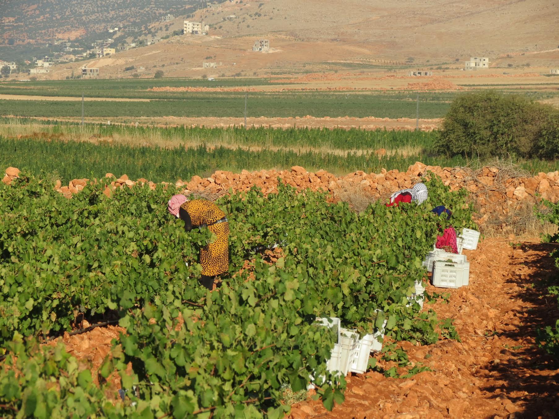 Couvent_rouge_Lebanon_borderless_wine.jpg