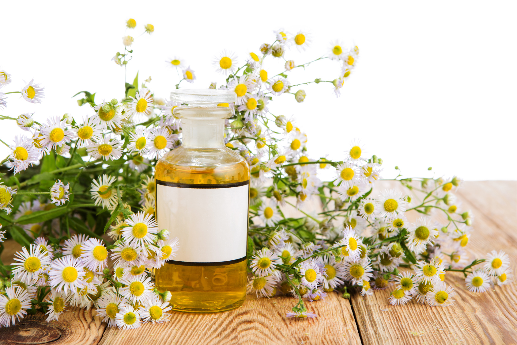 Chamomile-essential-oil (1).jpg