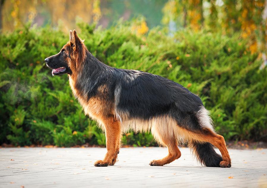 dog-fur-and-skin.jpg