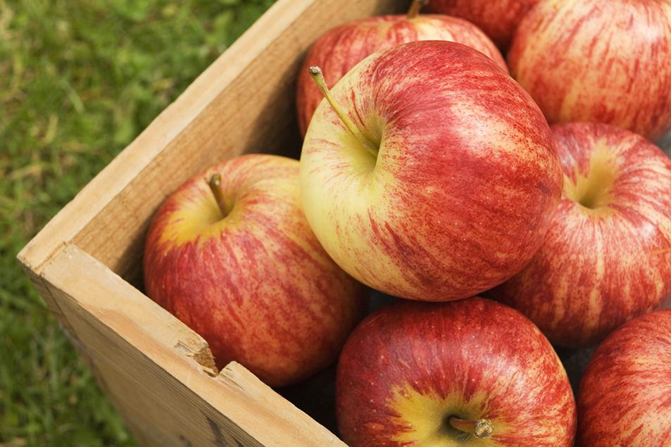 apples-in-box.jpg
