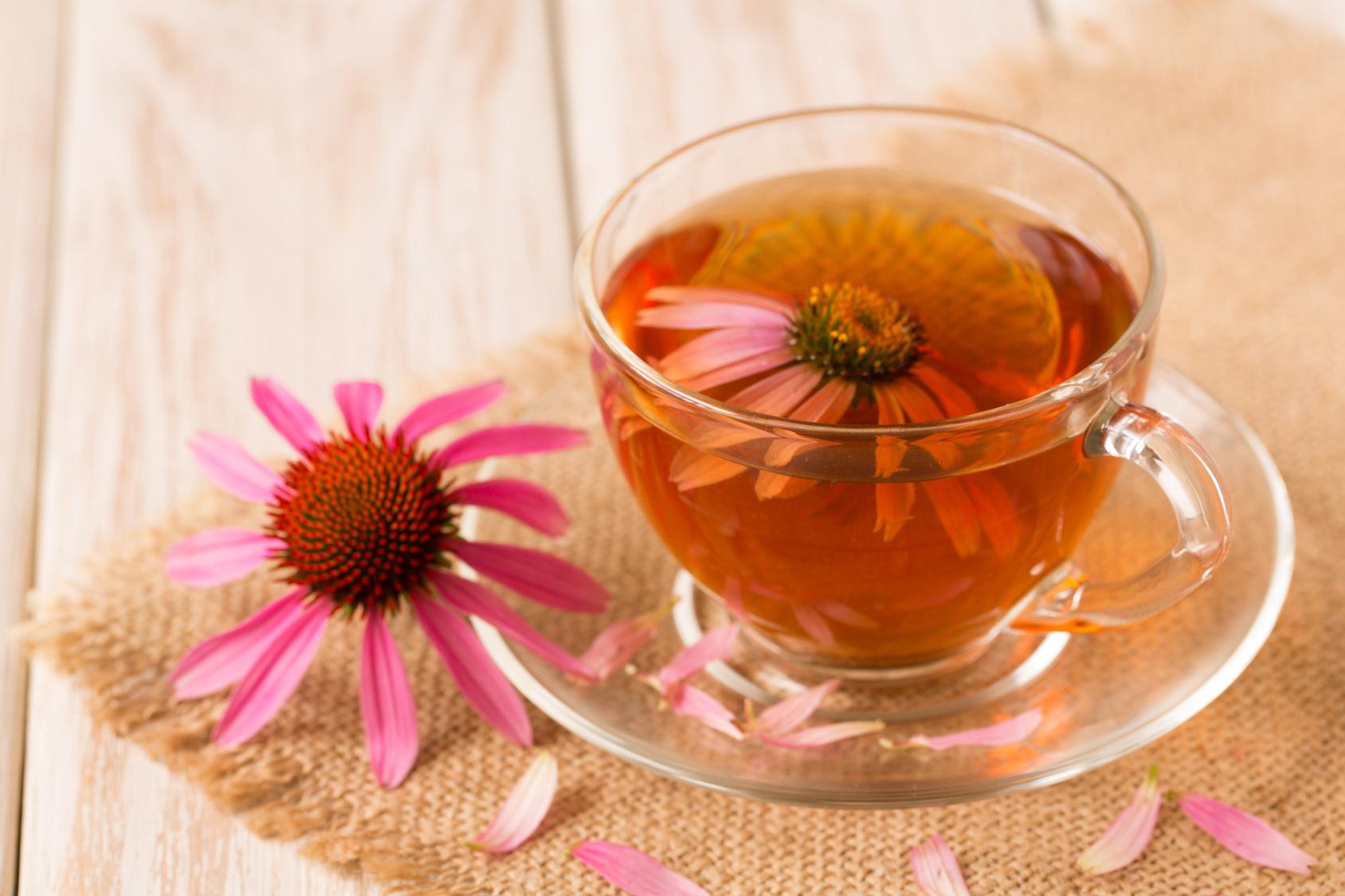 echinacea-tea.jpg