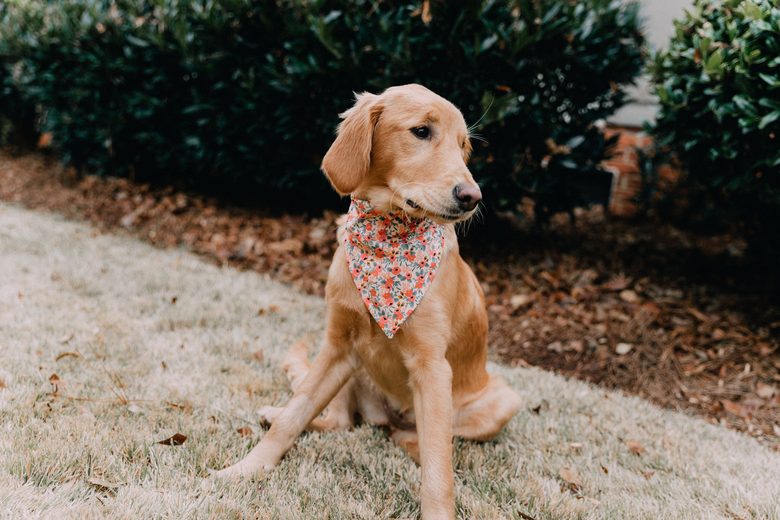Flamingo Paradise Over The Collar Dog Bandana And Matching Scrunchie Pet Accessories 90s Fashion Scrunchies Dog Mom Matching