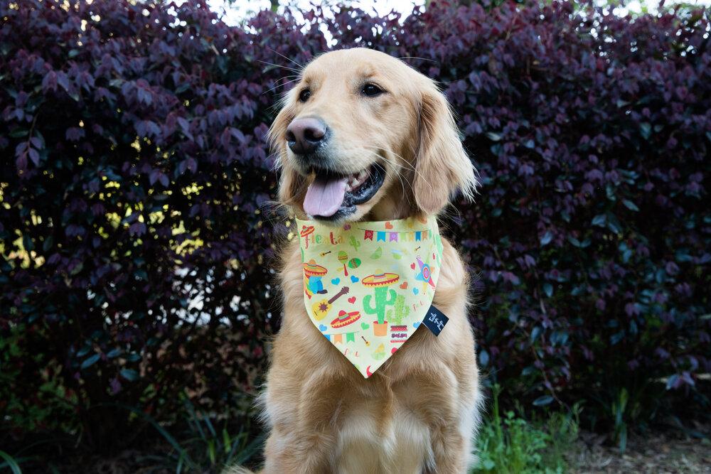dog bandana Autumn mums dog bandana,Personalized dog bandana Fall dog bandana
