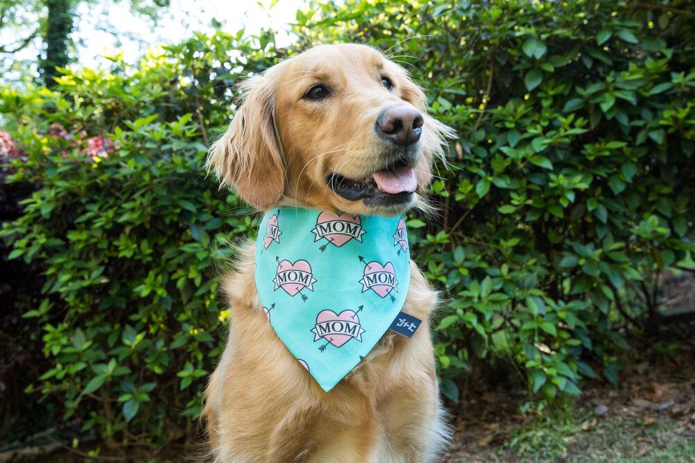 Brightly Colored Dog Bandana Blue Flowers Tulip Dog Bandana Fun Dog Bandana Flowered Dog Bandana Cute Dog Bandana Pretty Dog Bandana