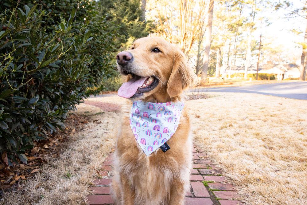Girl Dog Bandana Cotton Dog Bandana Purple Dog Bandana Dog Bandana Floral Dog Bandana Lilac Dog Bandana Snap /& Tie Bandana