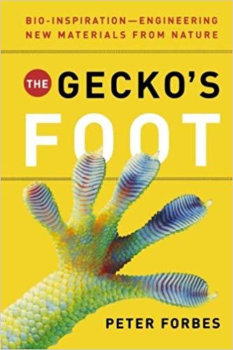 geckos foot.jpg