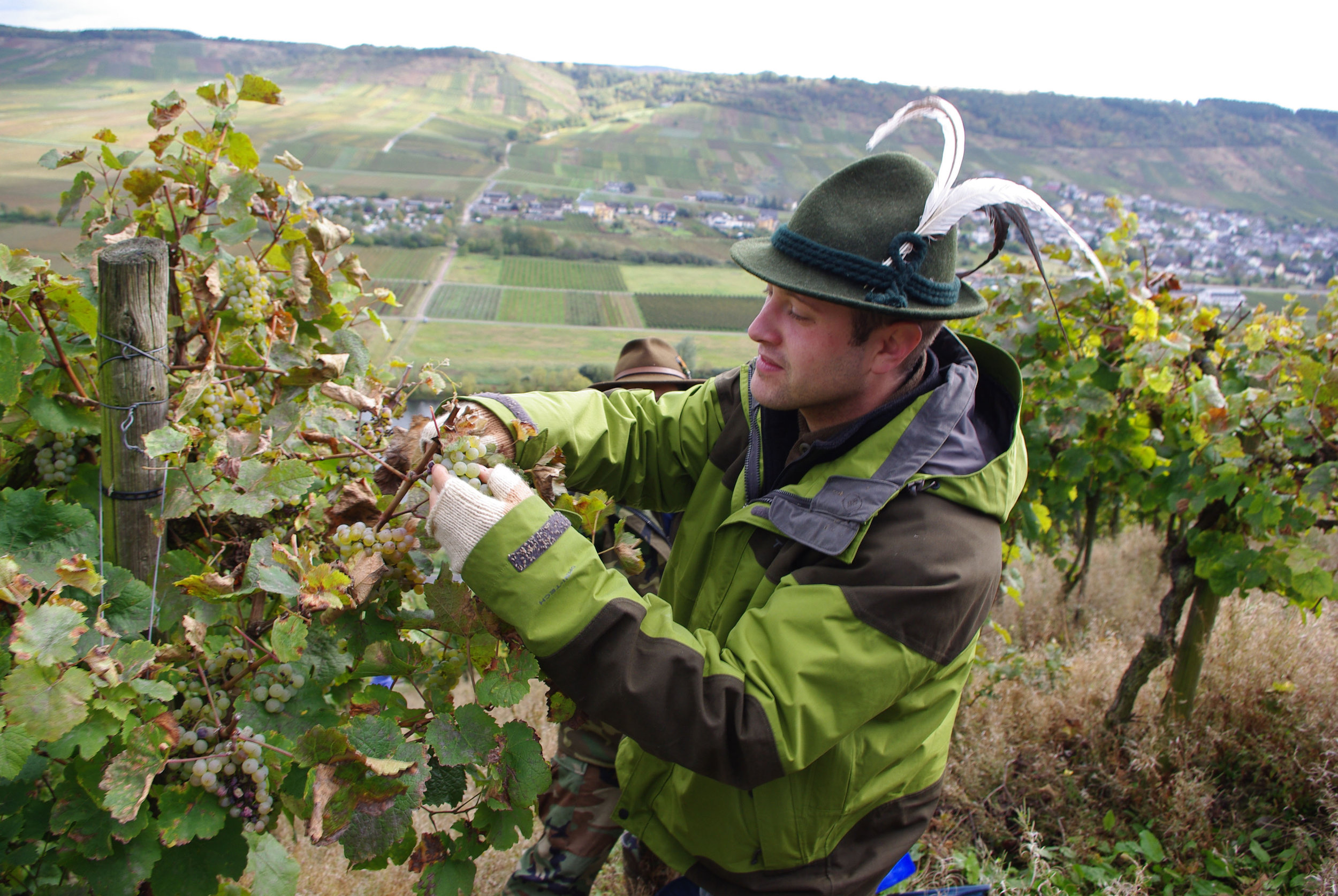 A visiting staff sergeant from Spangdahlemn air base prunes grapes to help with the harvest of a local vintner in Mosel, Germany (U.S. Air Force).