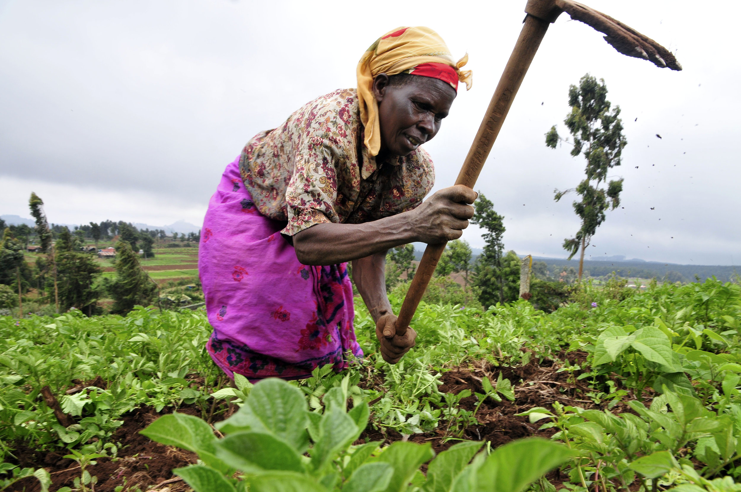 A Nigerian woman works on her crops.