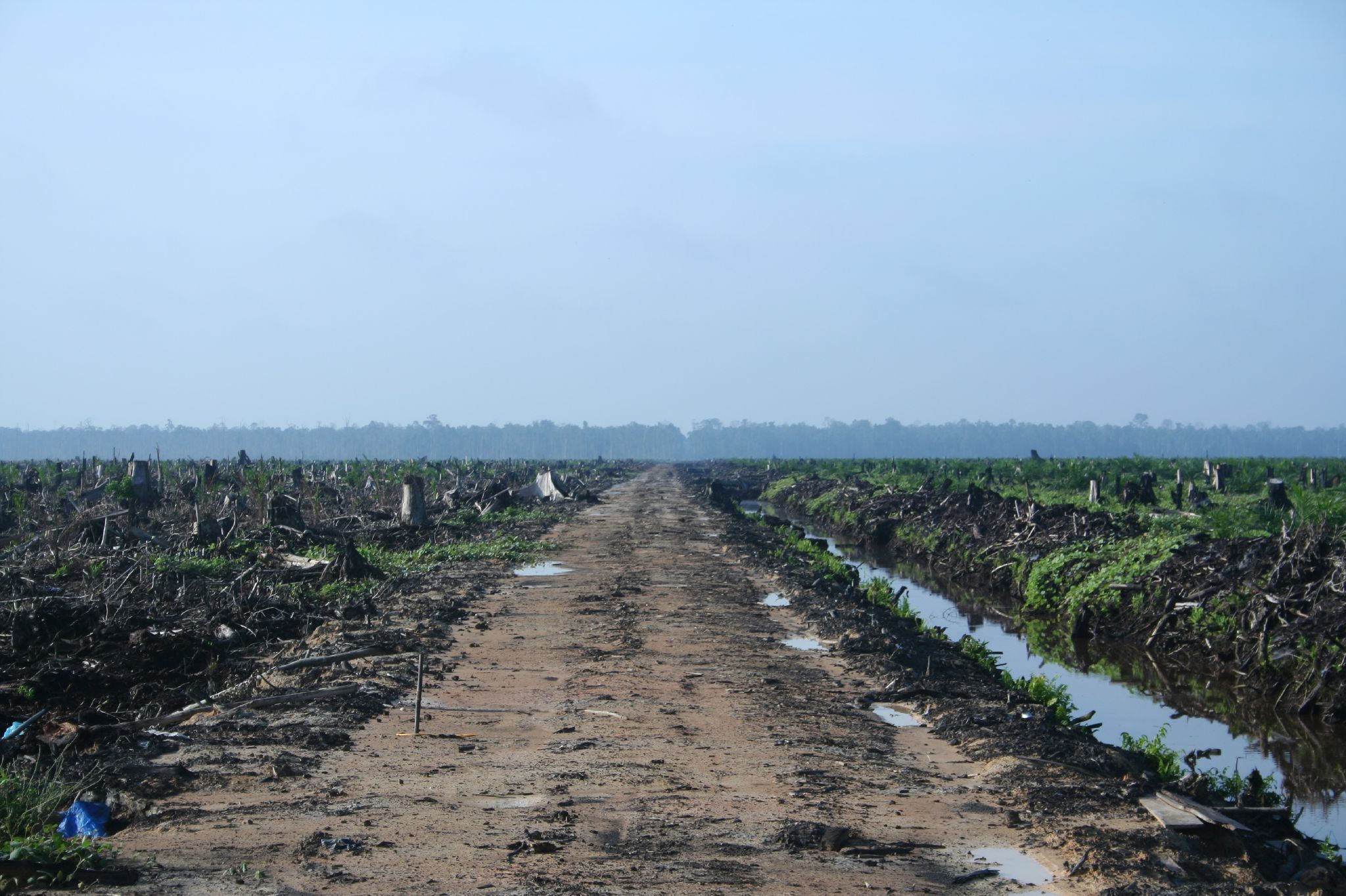 Burned forests throughout Indonesia show the effects of slash-and-burn agriculture. (Wikimedia Commons)