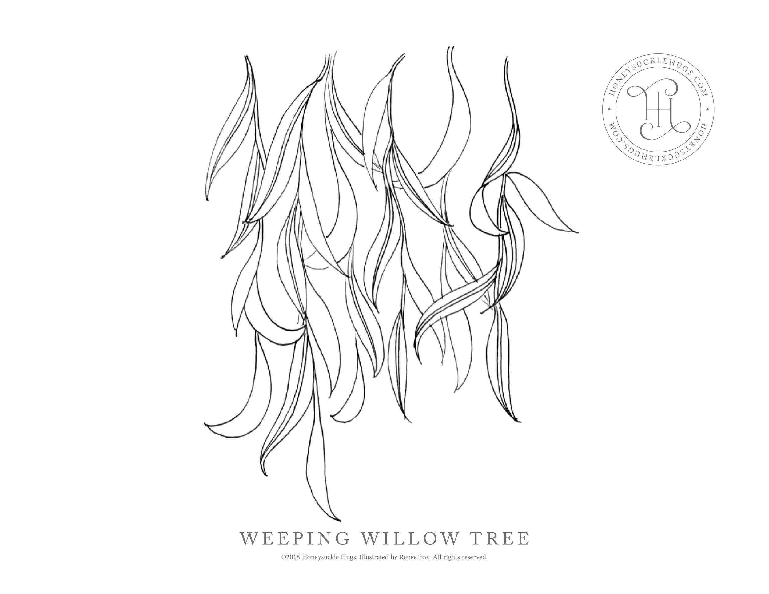 weeping-willow-coloring-page.jpg