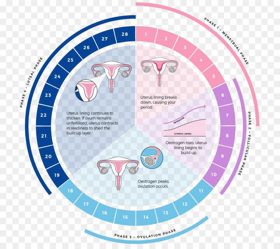 kisspng-menstrual-cycle-menstruation-luteal-phase-uterus-m-menstrual-cycle-5b18abc3295105.3633807215283434911692.jpg