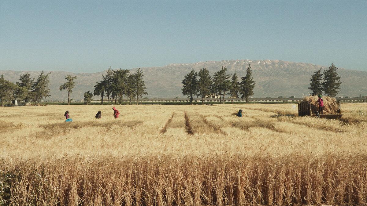 Wild_Relatives_(ICARDA-Harvest)-(1).jpg