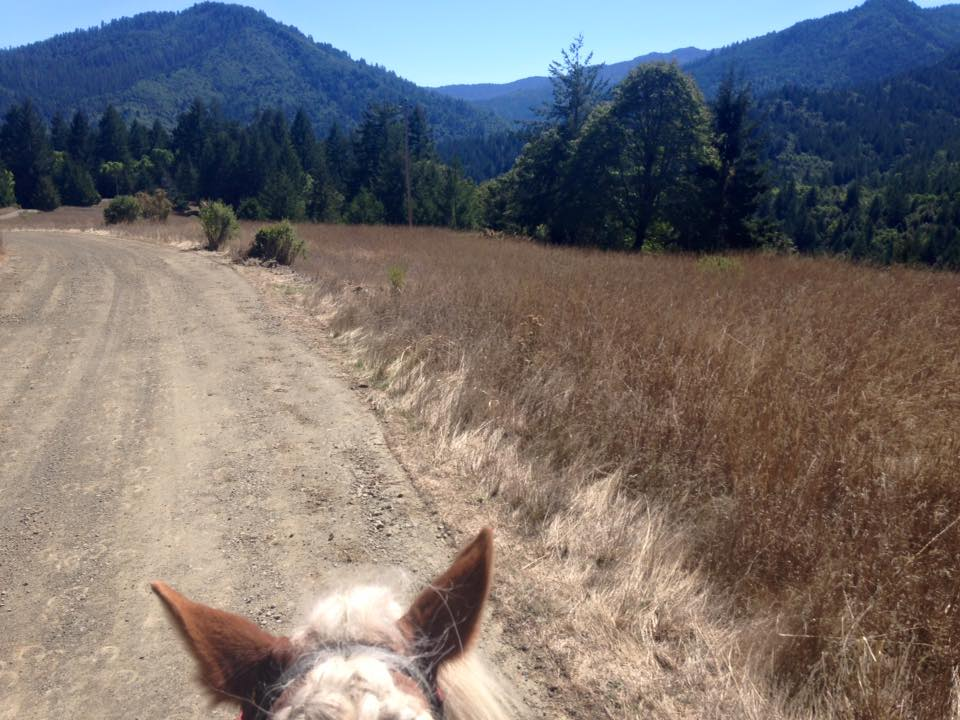 About - Find out about our organization,mission, and the sport of endurance riding.