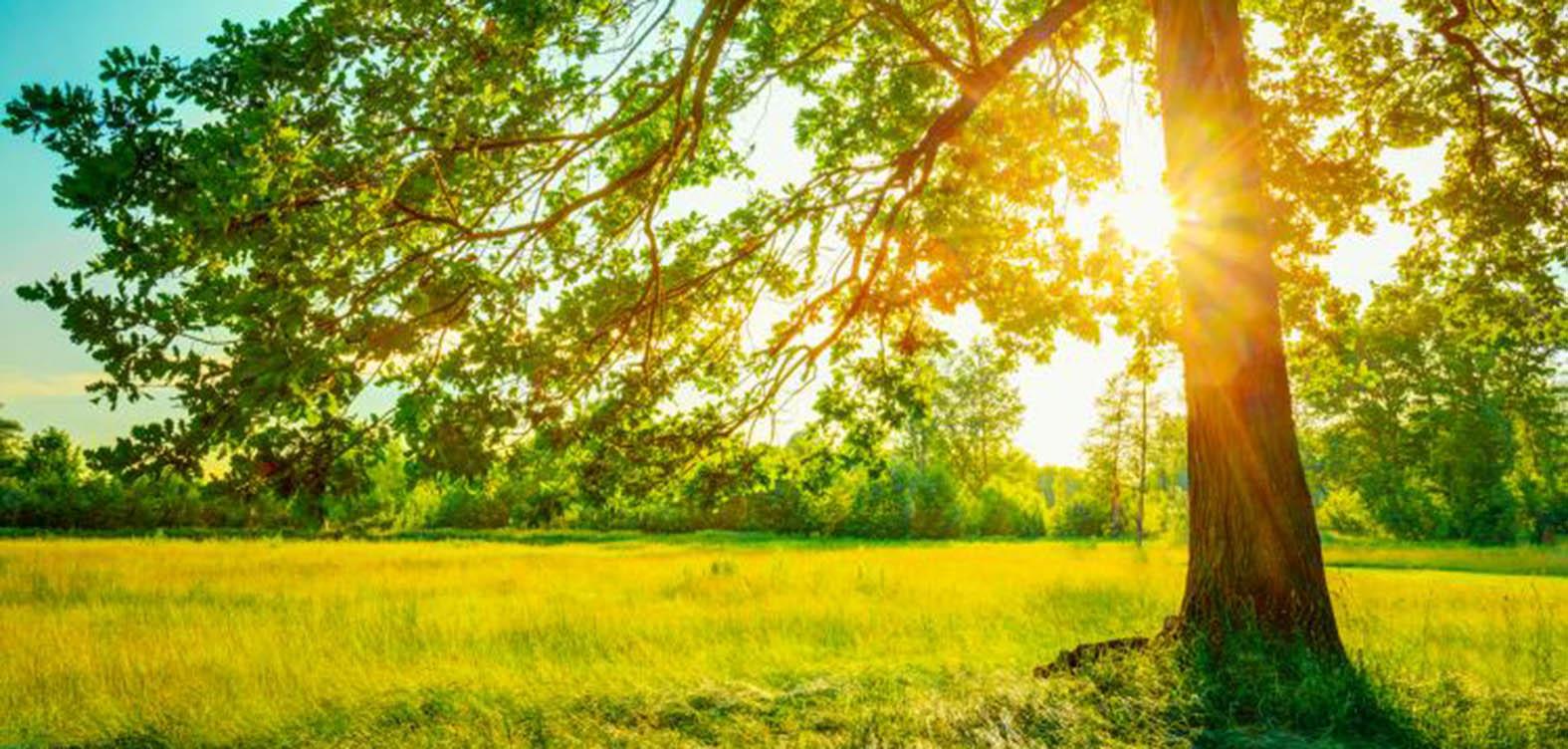 summer-tree.jpg