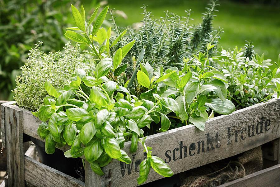WFAS Spring.to.Summer.Herbs.jpg