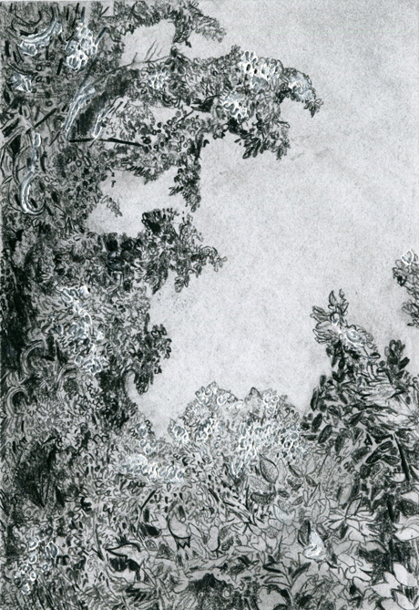 """Clara McClenon,    Treetops (McCarren Park),    2018, Charcoal pencil and gesso on paper, 5 x 7"""""""