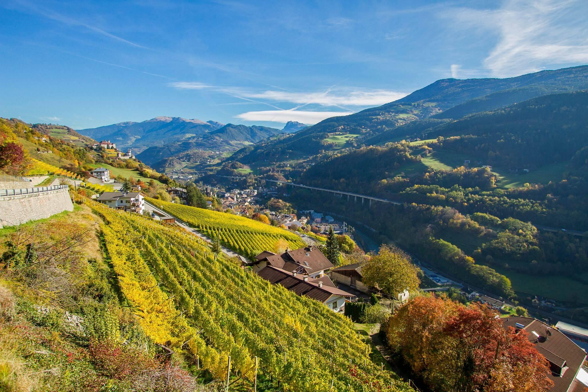 Wijnbouw op de oevers van de Adige.