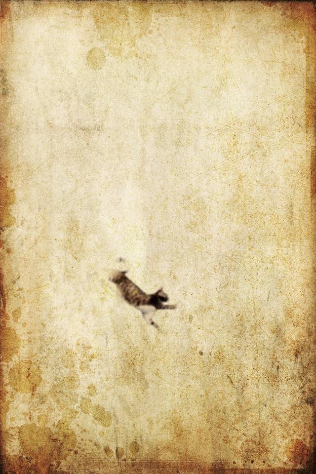 cat-landing.jpg