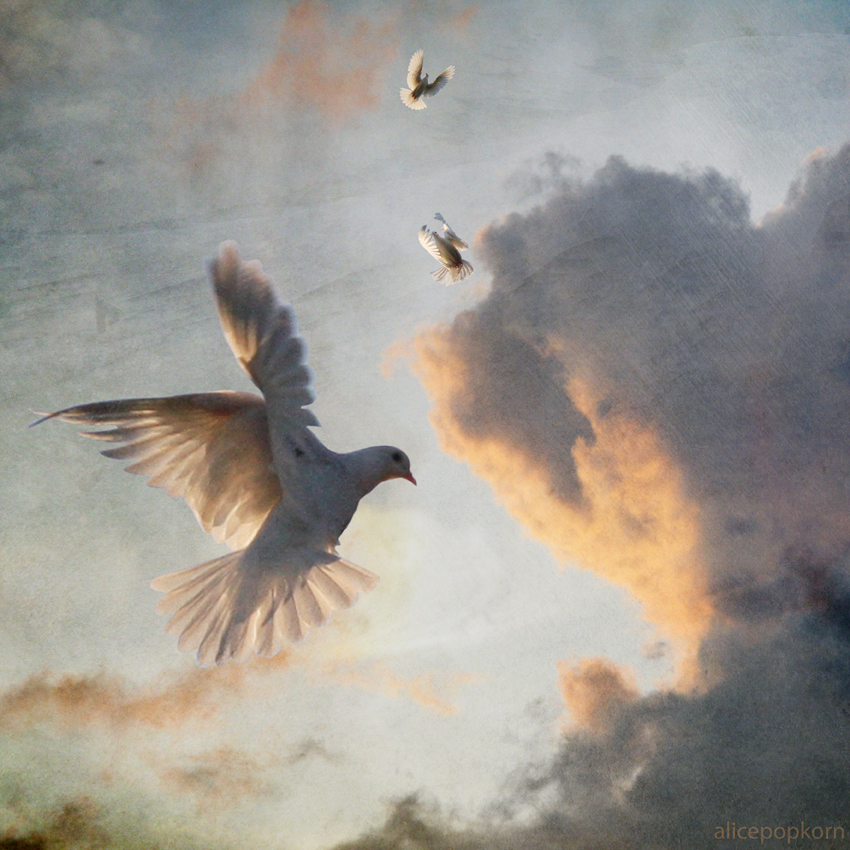 dove-sky.jpg