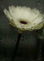 rainy-flower-e1364287078343.jpg