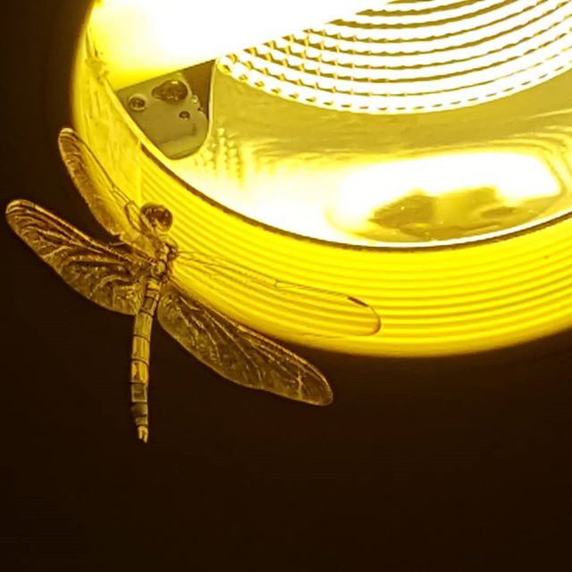 A rare Dragonfly sighting by our school's entrance. As Dragonflies spend most of their lives in their larvae states, they can only enjoy their lives with wings for a very short time.  It is a reminder for us that we also don't have much time to live (especially in our youthful years) and therefore, we must live in the moment and live life to the fullest.  #高槻 #英会話 #大阪