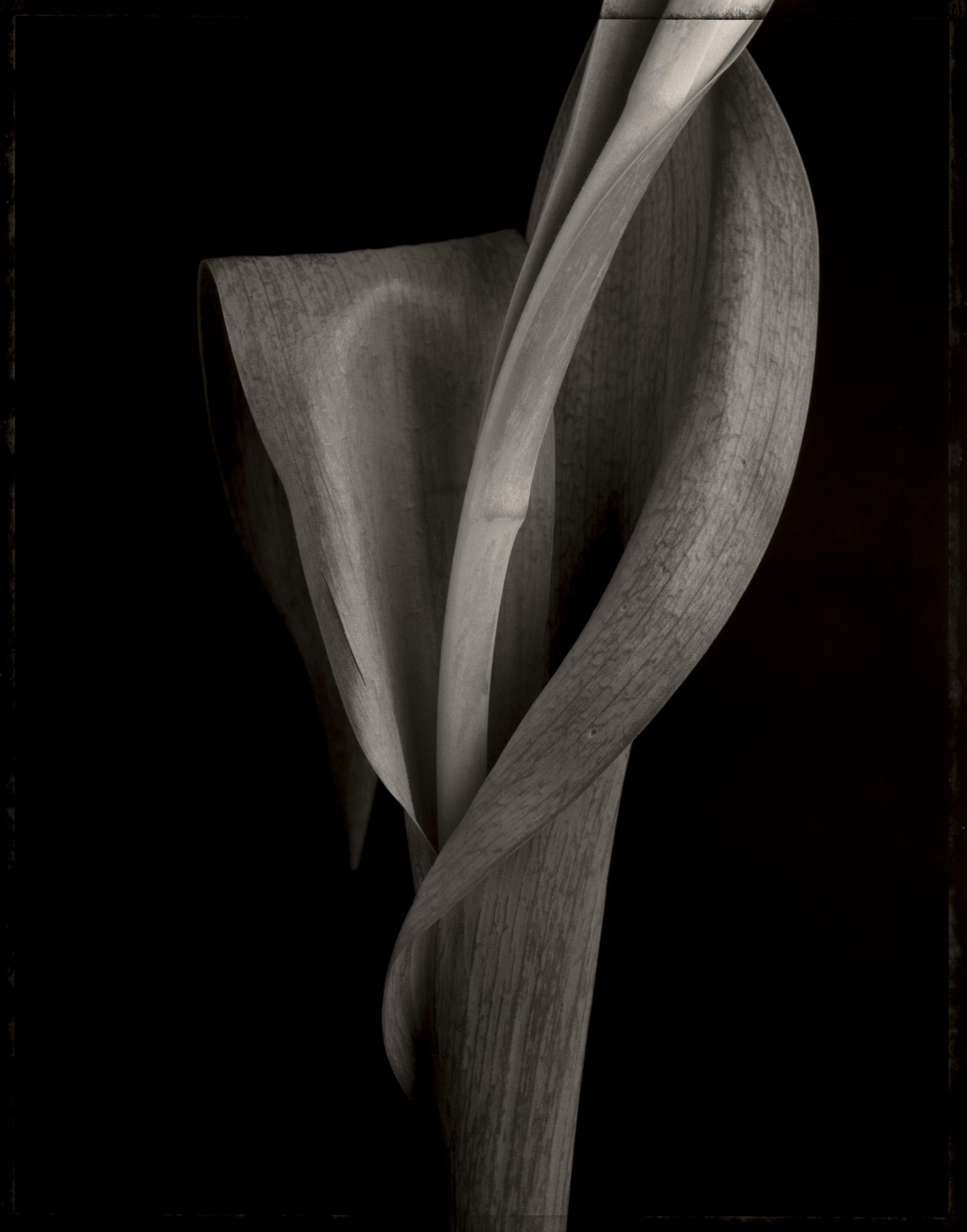 tulip_stem_print12.jpg