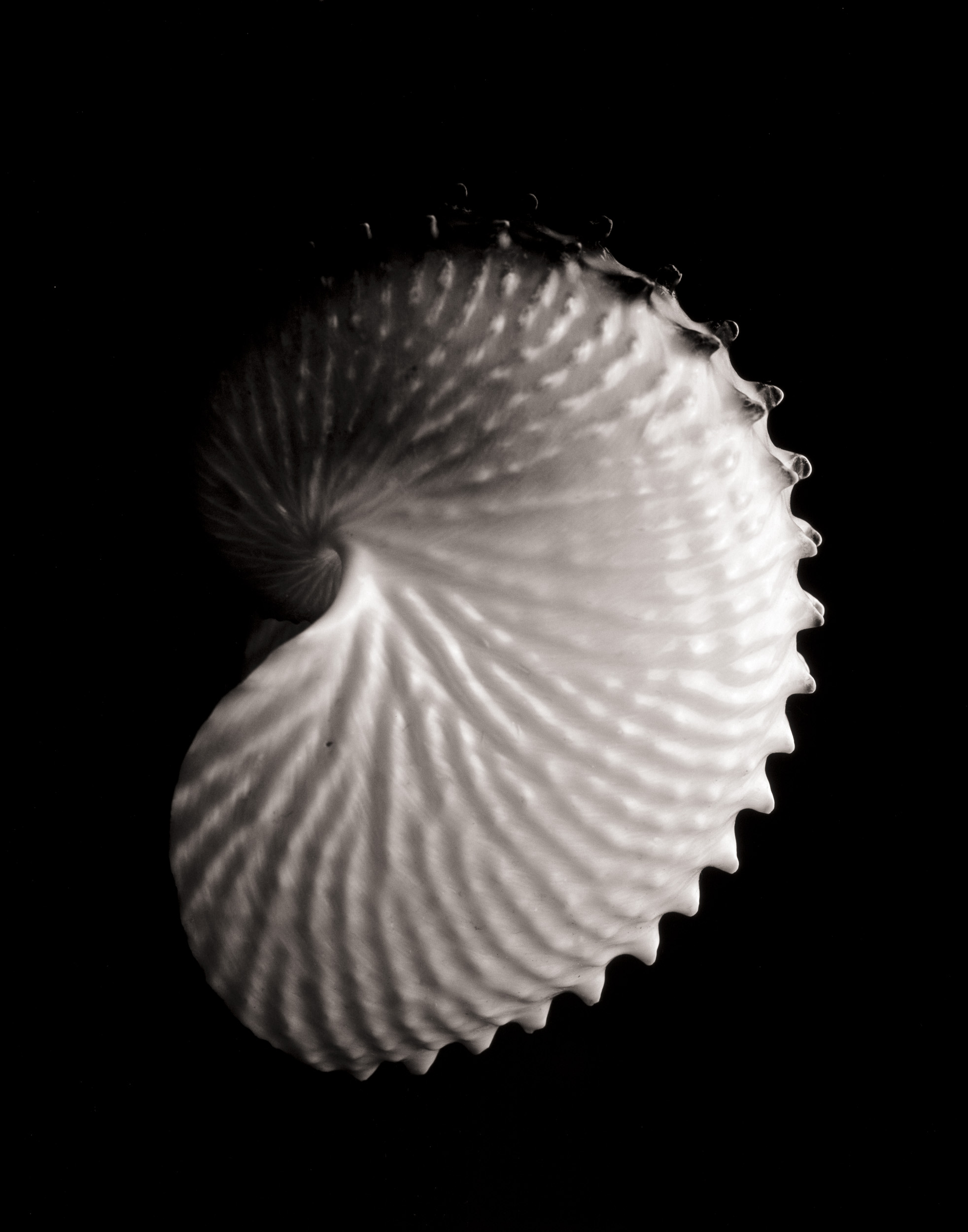 shell12_print18.jpg