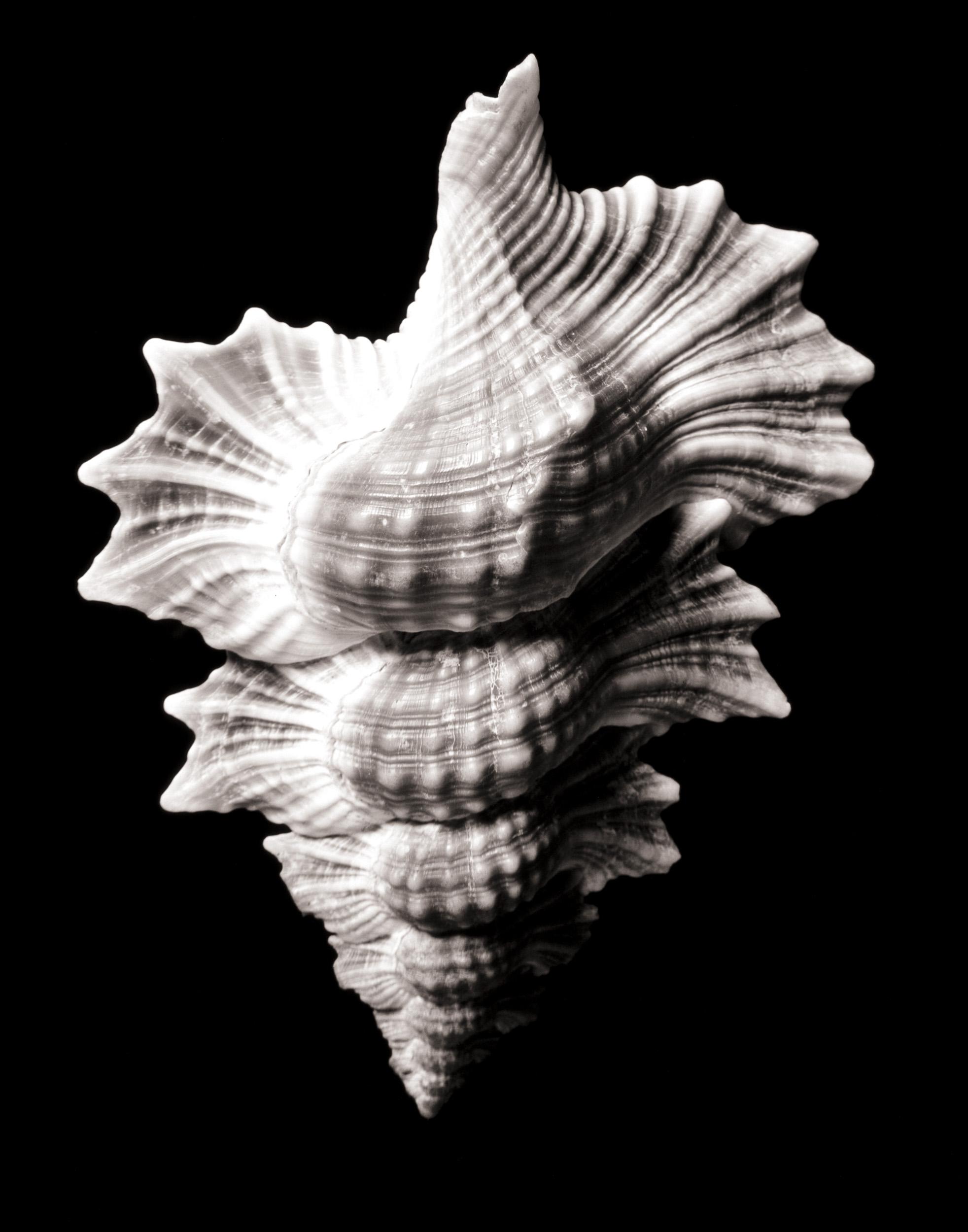 shell13_print17.jpg