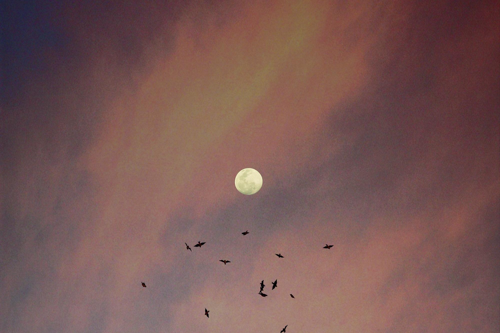 Die Elemente einer Lunar Prana Vinyasa™ Praxis beinhalten: - Lunar Prana Vinyasa Namaskars, Bewegungsabfolgen als Meditation in Bewegung. Diese regen den Energiefluss und die Fluidität unseres Körpers an, und unterstützen diesen bei der Regeneration und Verjüngung, Mond-Mudrasanas, längeres Halten in Vorwärtsbeugen, Umkehrhaltungen und liegenden Asanas Meditation, Mantra, Mudra und Kontemplation, Opening und Closing Chants für Regeneration und Entspannung, Sahaja Prana Flow – der heilende Flow von spontanen Bewegungen. Pranayama – lunar-orientierte Atemübungen und andere Prana Flow Kriyas, Gelebte Weisheit sowie Integration universeller Weisheit, unterstützende ayurvedische Tips, um Ojas (Vitalität, Lebensfrische) im alltäglichen Leben zu kultivieren