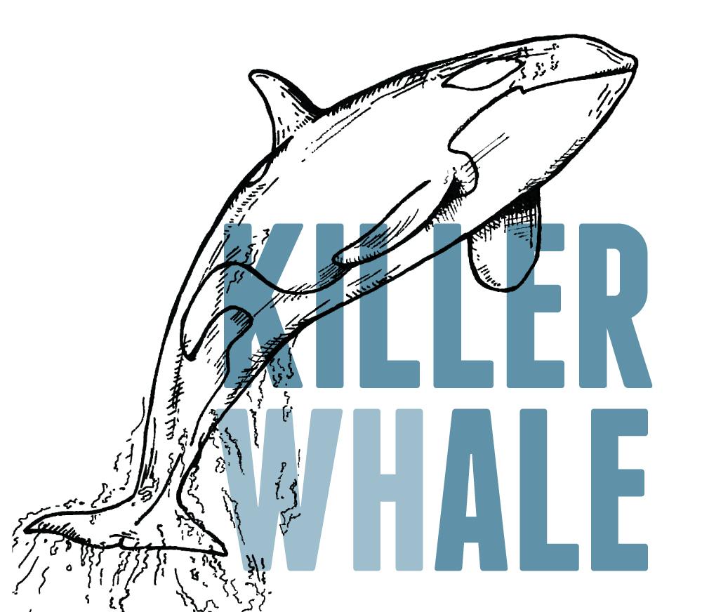 2018_05_28_MIMMP_KillerWhale.jpg