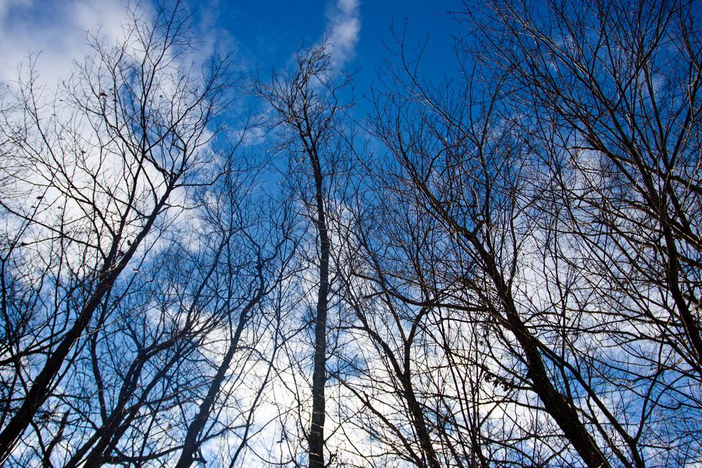 cold-trees.jpg